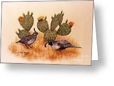 Southwest Art Gambels Quail Greeting Card