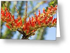 Southwest Ocotillo Bloom Greeting Card