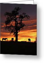 Southwestern Sunrise Color, Silhouetted Oak Tree And Three Horses Greeting Card