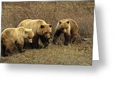 Sow Grizzly With Cubs Greeting Card