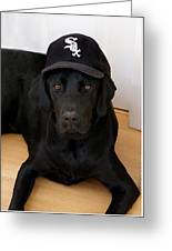 Sox Fan Greeting Card