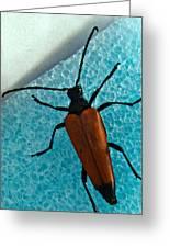 Space Age Beetle Greeting Card