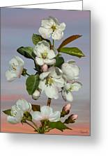 Spade's Apple Blossoms Greeting Card