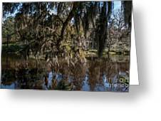 Spainsh Moss Hanging Over Pond On Middleton Place Greeting Card