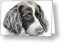 Spaniel Drawing Greeting Card