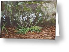 Spanish Bluebells Greeting Card