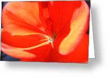 Spanish Geranium Greeting Card