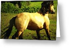 Spanish Horse Dancing Greeting Card