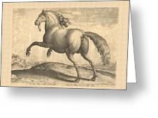 Spanish Horse Renaissance Engraving Greeting Card