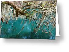 Spanish Moss And Emerald Green Water Greeting Card