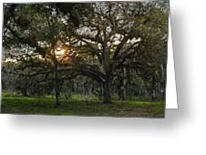 Spanish Moss During Sunset Greeting Card