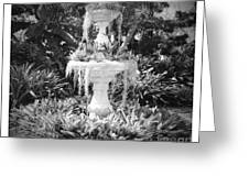 Spanish Moss Fountain With Bromeliads - Black And White Greeting Card