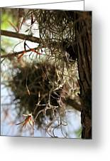 Spanish Moss I Greeting Card