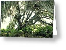 Spanish Moss In Motion Greeting Card