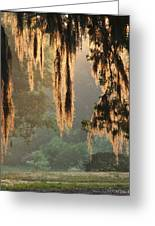 Spanish Moss In The Morning Greeting Card