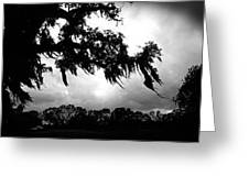 Spanish Moss In The Sunlight Greeting Card