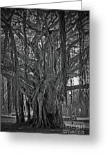 Spanish Moss Of The Tree Greeting Card