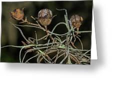 Spanish Moss On Azalea  Greeting Card