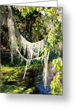 Spanish Moss Over The Swamp Greeting Card