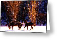 Spanish Mustangs Playing In The Powder Snow Greeting Card