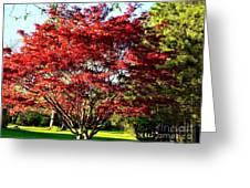 Sparkling Japaneese Maple Tree Greeting Card