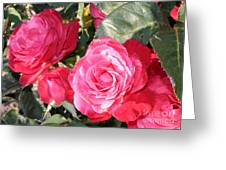Sparkling Roses Greeting Card