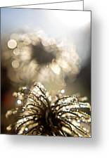 Sparkly Seedheads Greeting Card