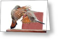 Sparring Flickers Greeting Card