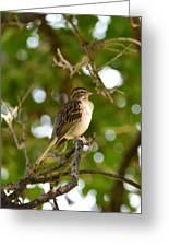 Sparrow-1 Greeting Card