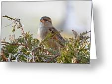 Sparrow 1 Greeting Card