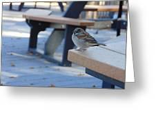 Sparrow 2 Greeting Card