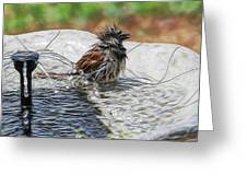 Sparrow Bath Time 9242 Greeting Card