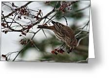 Sparrow Eating Berry Greeting Card