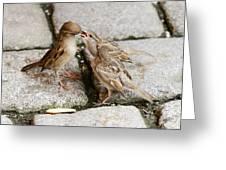 Sparrow Feeding Fledgelings Greeting Card