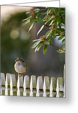 Sparrow In Colonial Williamsburg Greeting Card