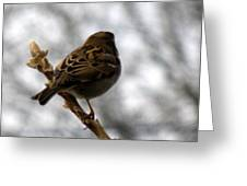 Sparrow In Springtime Greeting Card