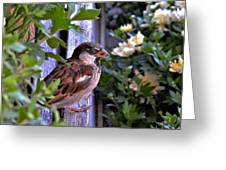 Sparrow In The Shrubs Greeting Card