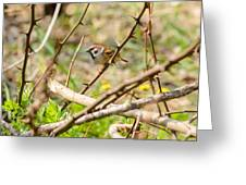 Sparrow In The Thorns Greeting Card
