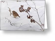 Sparrow In The Winter Snow Greeting Card