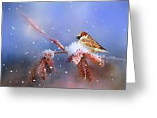 Sparrow In Winter Greeting Card
