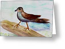 Sparrow On A Branch Greeting Card