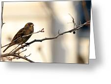 Sparrow On A Limb Greeting Card