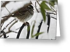 Sparrow On Fence Greeting Card
