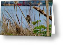 Sparrow On The Cattails Greeting Card