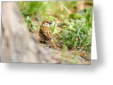 Sparrow On The Ground Greeting Card