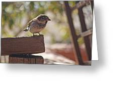 Sparrow. Greeting Card