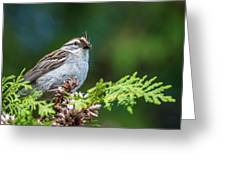 Sparrow With Lunch Greeting Card