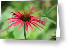 Spash Of Red Greeting Card