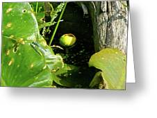 Spatterdock - Wild Yellow Water Lily Greeting Card