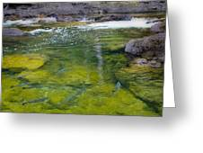 Spawning Salmon Greeting Card